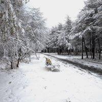 Первый снег. :: Борис Швец