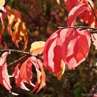 Осень в красках прекрасна :: Лидия (naum.lidiya)