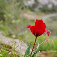 В горах Замина. :: Ирина Нафаня