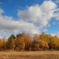 Золотая осень. :: Hаталья Беклова