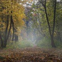 Осенняя тропинка :: Татьяна Суетина
