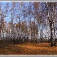 Осенний пейзаж :: marmorozov Морозова