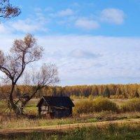 старый дом и дерево :: Валентина. .