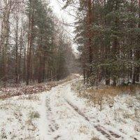 Первый день зимы :: Елена L-Neko