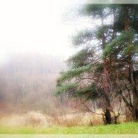 Туман,туман.... :: Ирина Князева