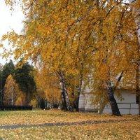 октябрьский листопад :: Наталья Золотых-Сибирская