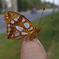 Бабочка. :: Татьяна Кошкина