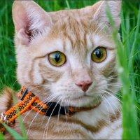 Мой любимый котик!!! :: Irina Schneider
