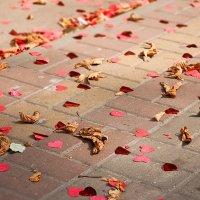...сердца осени... :: Андрей Гр