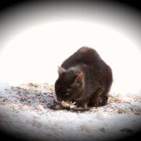 Уличный кот :: Наталья Дмитриева