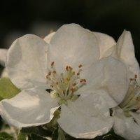 весна :: Надежда Круглова
