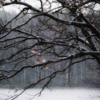 Снег идёт...... :: Юрий Цыплятников