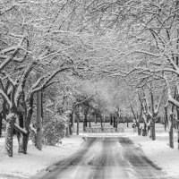 road :: Dmitry Ozersky
