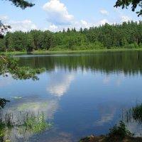 озеро летом :: Наталья