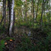 В лесу... :: Влад Никишин