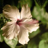 цветочек :: Яна Бугайская