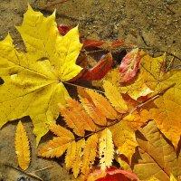 Листья упавшие в воду :: Лидия (naum.lidiya)