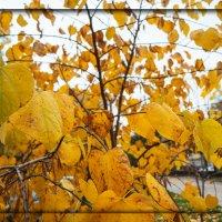Золотые краски осени :: Сергей Шруба
