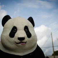 Городской панда :: Наталья Смагина