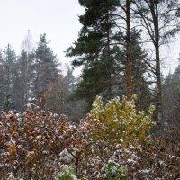 Осенняя метель :: Aнна Зарубина