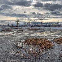 Весна на болоте :: Николай Андреев