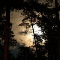 Волчье  Солнце... :: Валерия  Полещикова