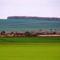 Поля...  осенние  поля... :: Валерия  Полещикова
