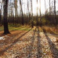 Но не жарко почему-то (светит, да  не греет) IMG_3393 :: Андрей Лукьянов
