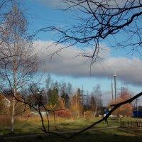 Небо и  ветки-2. :: Фотогруппа Весна.