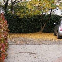 Осенние цвета :: Александр Скамо
