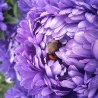 Шмель в цветке :: Ирина Крохмаль