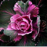 Ну чем я не роза?! :: Ирина Князева