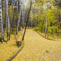 Осень! :: Вера Кочергина