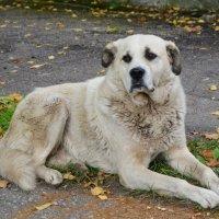 Бездомный пёс :: Ирина Никифорова
