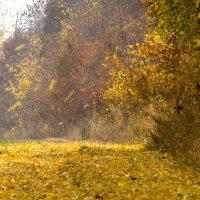 Осенние художества :: Vit