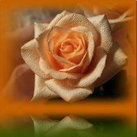 Отраждение красоты :: Лидия (naum.lidiya)
