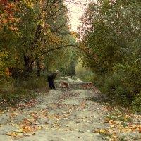 Осень :: Татьяна Новоселова