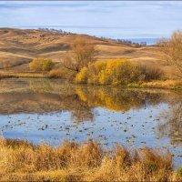 Озеро с кувшинками :: Любовь Потеряхина
