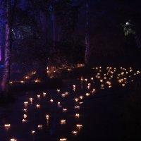 Свечи на воде :: Владимир Федоров