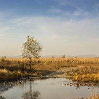 Осенний денёк :: Борис Коктышев