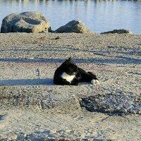 я на солнышке лежу... :: Константин Бабкин