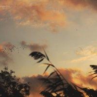 Необходимость одиночества... :: Мария Альбинина
