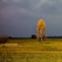 Во поле берёзонька стояла :: Алексей Окунеев