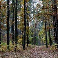 """Осень 2014 Парк """"Партизанской славы"""" Фото №5 :: Владимир Бровко"""