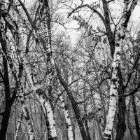 Деревья :: Игорь Beliy