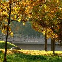 Луч света золотой этой осени волшебной :: Владимир Гилясев