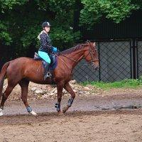 девушка и лошадь :: evgeni vaizer