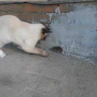 Кошка и Мышка :: Ирина Крохмаль