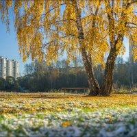 Россия. Балашиха. Золотая осень и первый снег. :: Юрий Дегтярёв