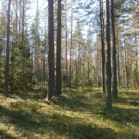 Прогулка по лесу. :: Валентина Жукова